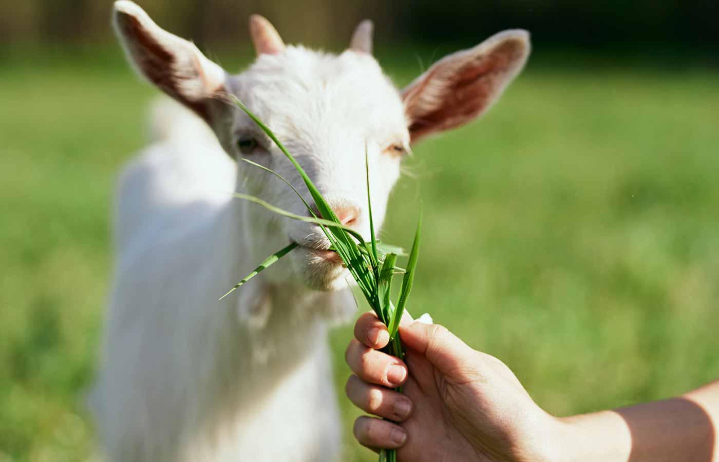 Evitar la crueldad animal
