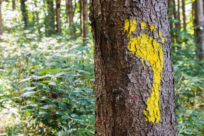 Impacto de la huella Ecológica