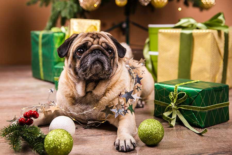 Regalar perro en navidad