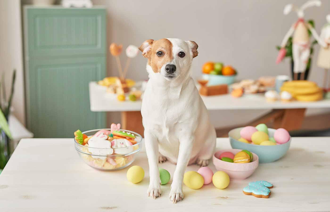 El azucar es un alimento prohibido en perros
