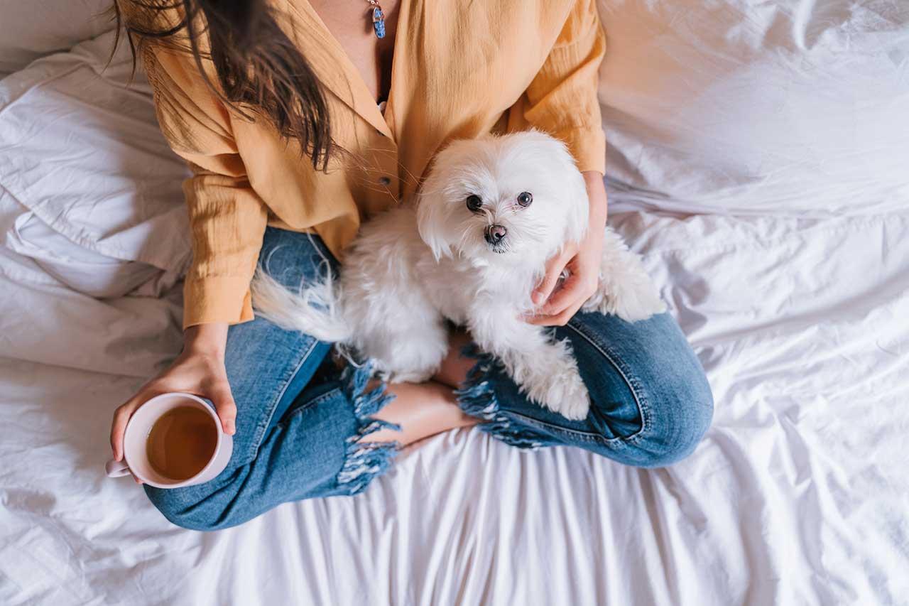 El cafe está prohibido para perros
