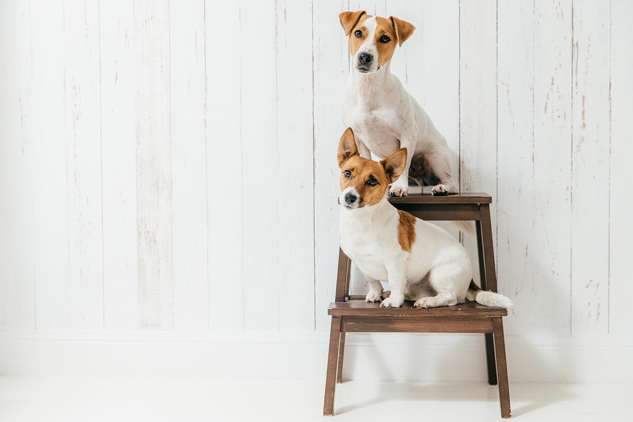 Las nueces no es para perros