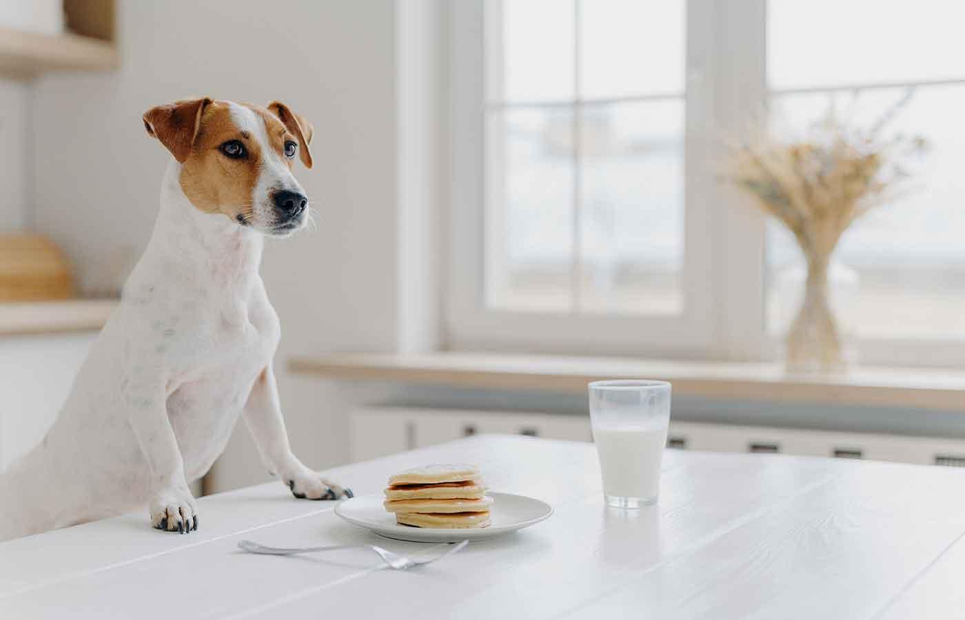 Leche queda prohibida para perros
