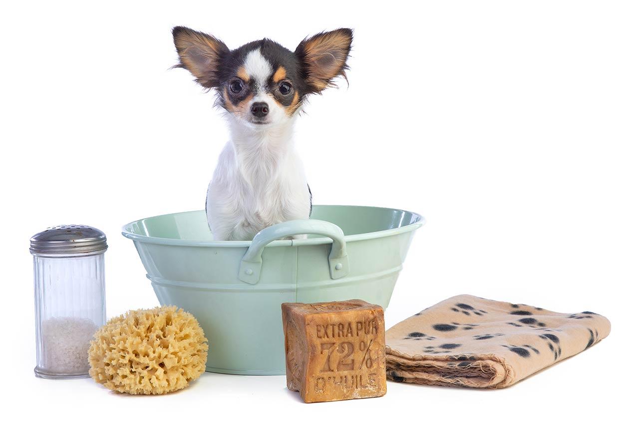 Los perros no pueden tomar coles de bruselas