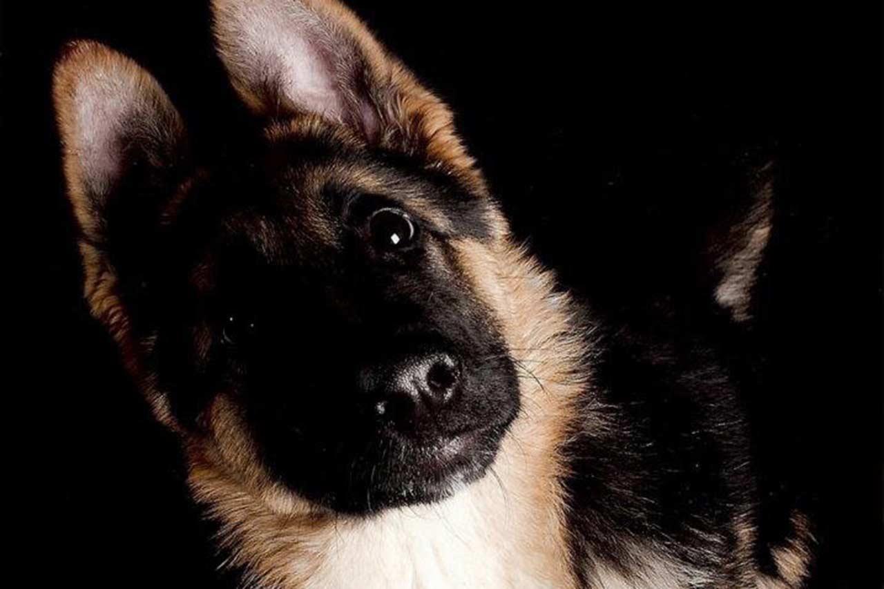 La cebolla no es para perros