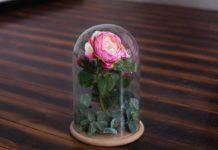 Ventajas de una rosa eterna o preservada