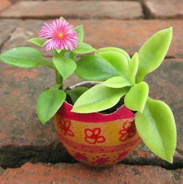 Las plantas de interior crasas se caracterizan por ser voluptuosas y llamativas