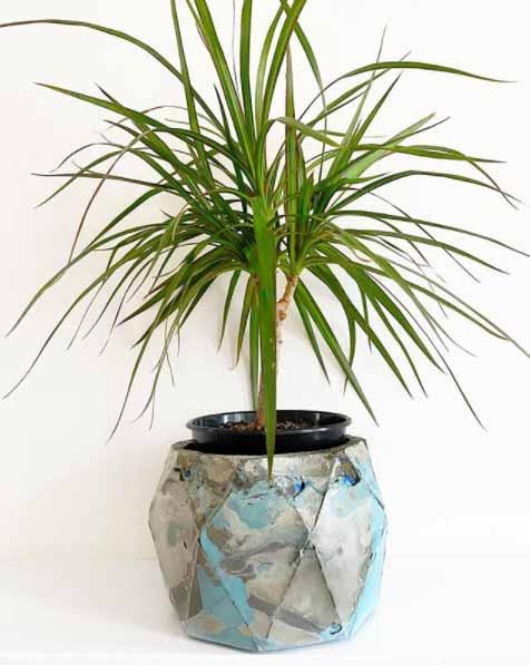 La planta de interior Drácena tiene una apariencia exótica
