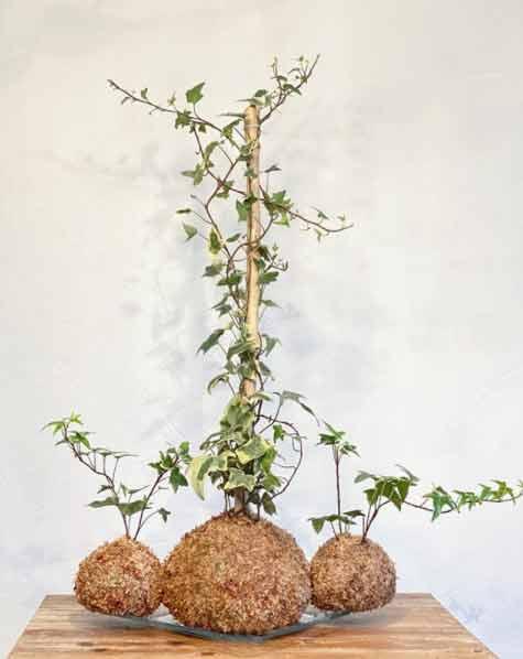 Las Hiedras son plantas de interior fácil de mantener