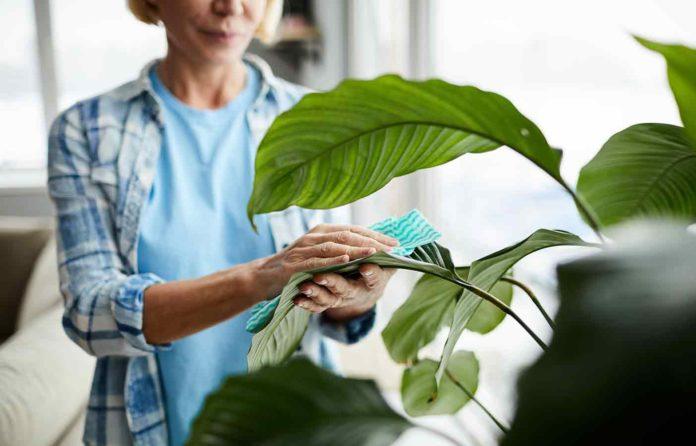 Plantas de interior resistentes en las peores condiciones