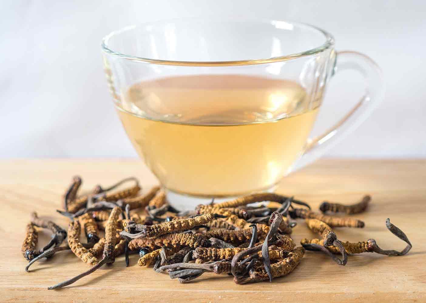 Preparación de té revitalizante con Cordyceps.