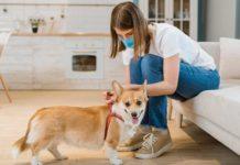 Consejos para mascotas durante el coronavirus