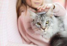 Te explicamos los motivos para elegir un gato como mascota