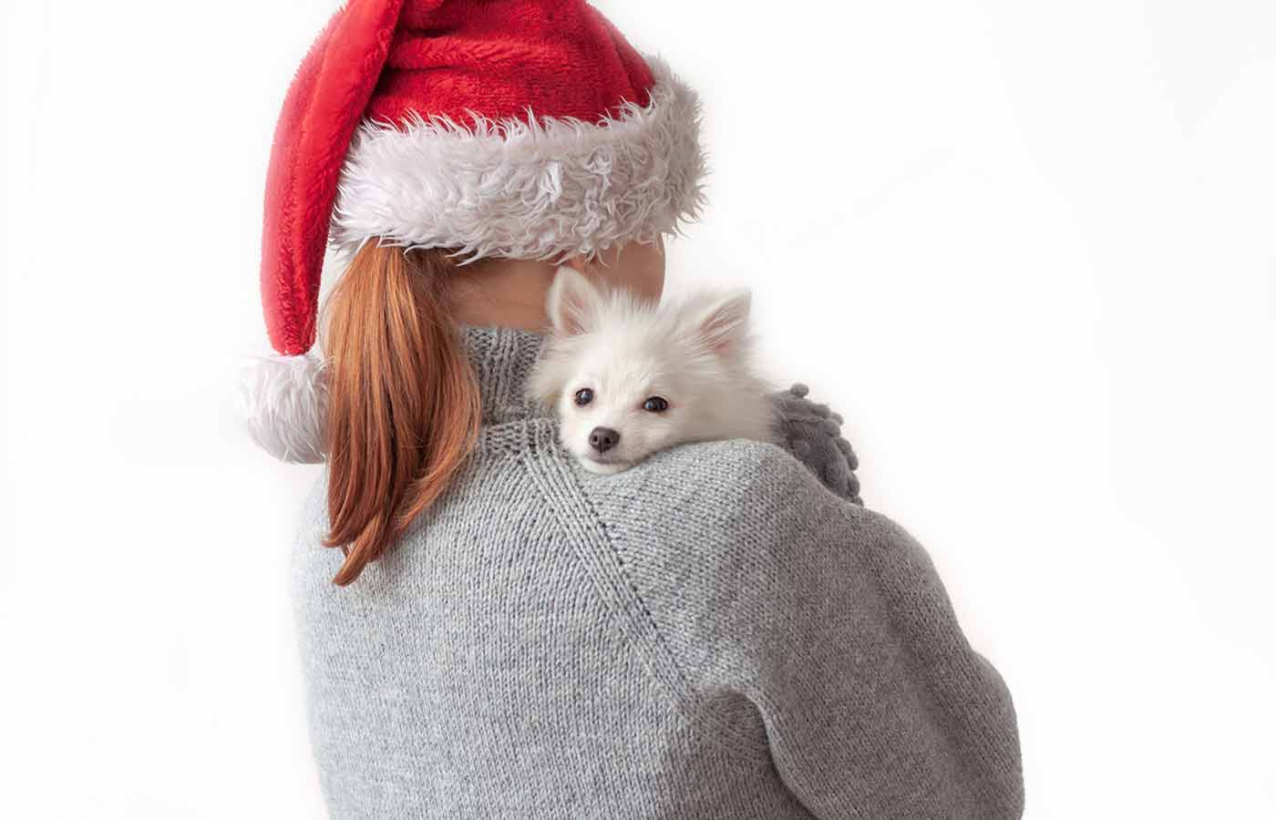 Hay que saber al regalar una mascota por navidad que este pasa a ser un miembro de la familia