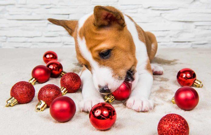 Las mascotas no suelen ser buen regalo de navidad